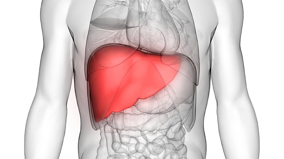 L'hépaphénol : un produit miracle pour le foie ?